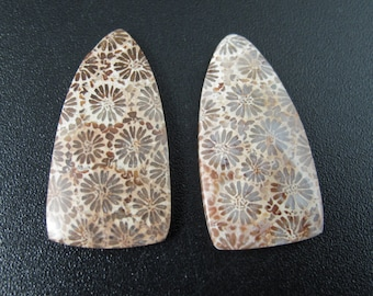 Beautiful Indonesian fossil coral pair cabochon, Earrings, Jewelry making supplies S7557