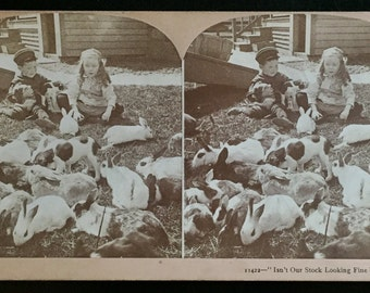 Original Antique Stereoview Photograph Children Overrun with Rabbits