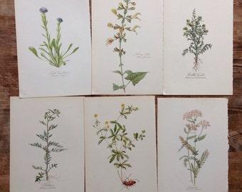 Big lot of vintage Botanical Flower print Book Plate 1940s