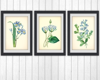 Botanical Print Set, botanical set of 3 Blue floral printable, instant download art, lovely home decor as an Instant Dowload