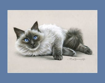 Ragdoll Cat Print Blue Eyes by Irina Garmashova