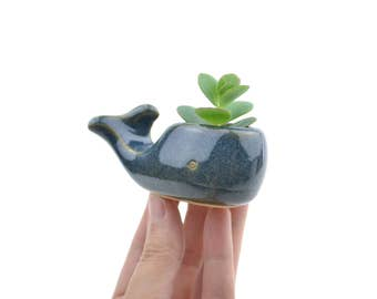 Tiny whale planter - animal planter, ceramic planter - made in Brazil