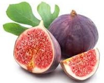 Fig, Lemon, Citron, trio (3)
