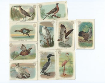 Victorian Bird Art - Church's  Soda Cards - 1908 Lithograph Advertising Cards - Hy Hintermeister - Vintage Cigarette cards - Flamingo, Owl
