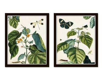 Nature Study Collage No. 23, Botanical Print Set, Art, Giclee, Prints, Vintage Botanical, Butterfly Print, Collage, Illustration, Botanical