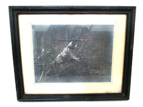 Antique Photograph, Hunting Dog, Setter or Pointer, Old Framed Photo of Hunting Dog, Very Dark, Dog in the Pond Underbrush, Unusual Photo