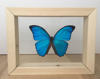 blue morpho handmade framed butterfly taxidermy butterfly real butterfly framed butterflies butterfly art