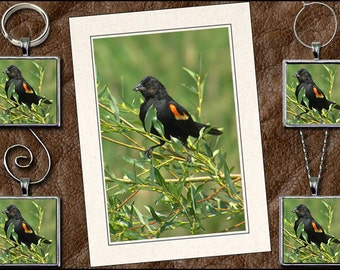 Red-Winged Blackbird Note Card Set - Blackbird Pendant, Blackbird Keyring, Blackbird Ornament, Blackbird Wine Charm - Greeting Card (GP145)