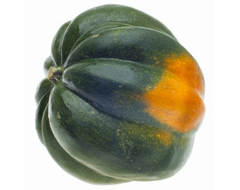 VSQWA)~ACORN SQUASH~Seeds!!!~~~~~~Wonderful Heirloom Texture!
