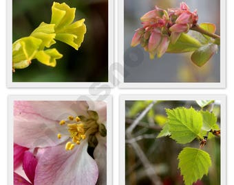 Spring in the square - set of 4 photo cards or photo prints
