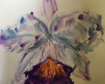 Cattleya Orchid Blooms: Original Chalk Pastel Drawing