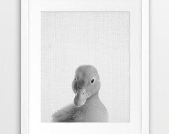 Duckling Print, Nursery Animal Decor, Baby Animal Wall Art, Duckling Photography, Black White Nursery Decor, Kids Room Decor, Printable Art