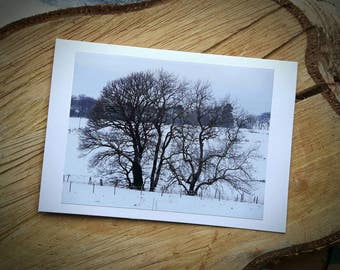 Winter Trees Forest Art Photographic Cards - Snow Woodland Photograph Greeting Christmas Card - Made to order