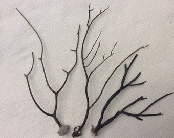 Brown Sea Fan Branches (Set of 3)