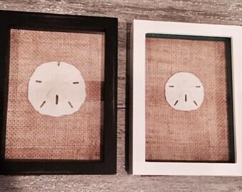 Framed Sand Dollar