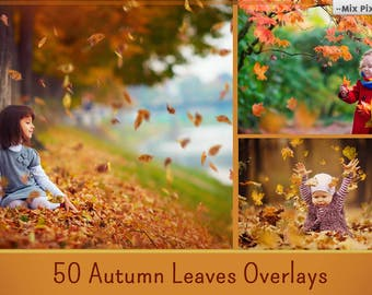 Autumn Leaves Overlays, PNG, Falling Leaves , Fall leaves, Autumn Leaf, realistic, natural look, mini session
