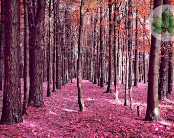 Autumn in the Woods, A4 photography print, Gloucestershire Wotton-under-edge, landscape tinted