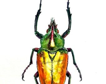 Beetle watercolor painting archival print: Theodosia perakensis