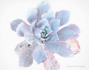 Succulent Art, Photography Print, Wall Art Print, Nature Photo, Botanical Art, Plant Photograph, Light Blue Bathroom Wall Decor, Bedroom Art