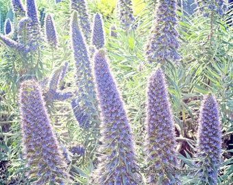 Bedroom Wall Art, Flower Photography Print, Horizontal Art, Bathroom Wall Decor, Purple, Lavender, Flower Picture Nature Photo Botanical Art
