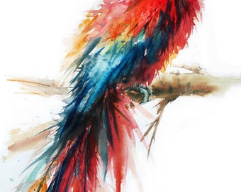Parrot Macaw Bird  Painting , Bird watercolor painting, watercolor, Bird print Art print size 8X11 inch for room décor and special gift