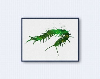 Centipede Watercolor Poster