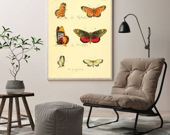 Butterfly Wall Print| Biology Wall Art| Insect Biology| Months Wall Art| Butterfly Wall Art| Entomology Gift| Science Wall Poster| HAP024