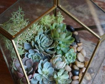 Diamond Shaped Glass Succulent Terrarium Garden