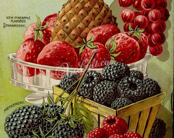 seeds_catalogs-04224 - Ananas, Pineapple, Strawberry, Currant, Raspberry, Blackberry, in basket, in box, plate, vase vintage printable cover