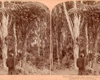 1896 Hawaii Stereoview Photo