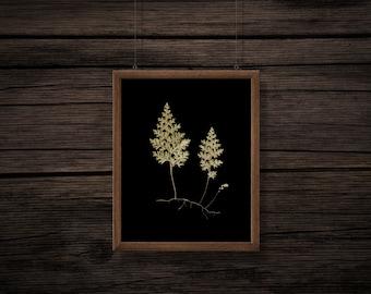 Fern Print - Black Background - Vintage Botanical Print - Botanical Printable - Digital Download - JPG - PNG - No Background - Clip Art