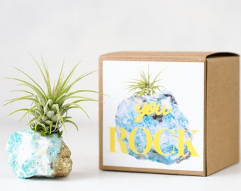 You Rock Amazonite Air Planter, Best Friend Gift, Thank You Gift, New Job Gift, Coworker Gift Desk Accessories Air Plant Birthday Gift