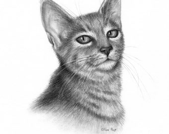 Custom Cat Portrait, Cat Drawing, Personalized Pet Portrait, Original Charcoal Drawing, Drawing Of Cat, Pet Portrait, Sketch From Your Photo