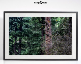 Forest Photography, Woodland Print, Forest Printable Art, Tree Branches Wall Art, Nature Photography,Nature Decor, Landscape Photography