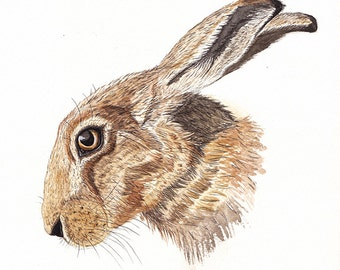 Hare painting, watercolour print, hare artwork, British wildlife, wildlife lover gift, brown hare, nature lover gift, mothers day gift