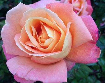 Irish Flower Garden Close Up