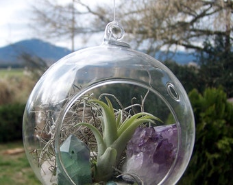Air plant Terrarium kit - Amethyst crystal cluster, rainbow green fluorite point, raw blue Tourmaline, sand, Tillandsia plant, peridot, moss