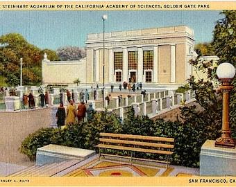 Vintage California Postcard - The Steinhart Aquarium, San Francisco (Unused)