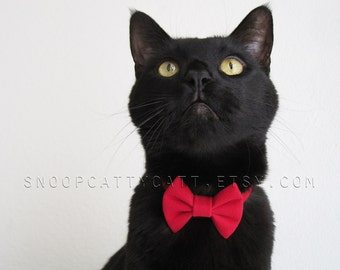 Cat Bow Tie - Velvet Heartthrob