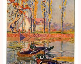 Antique WOOD DUCK Waterfowl Bird Lake House Lodge Tree Painting Fine ART Print