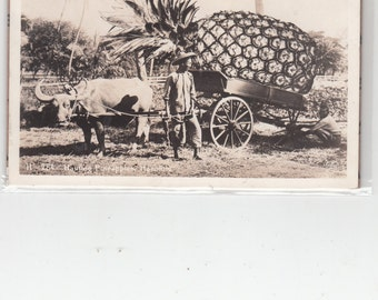 RPPC Exaggerated Pineapple On Cart Back Wheel Missing,Pulled By Oxen Honolulu Hawaii Postcard