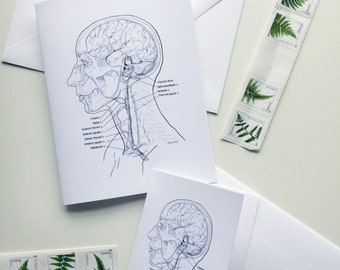 Venous Drainage of the Head and Neck Stationery