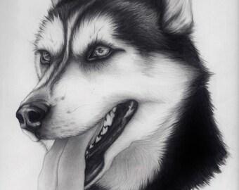 Siberian Husky. Original Drawing on Bristol Paper. Graphite Pencil Animal Art, Home Decor.