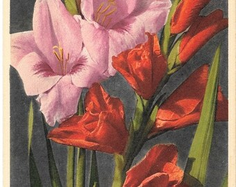 Ghent Gladiolus, Vintage Botanical Postcard, Unused 1940s, Thor E. Gyger, Switzerland  #950