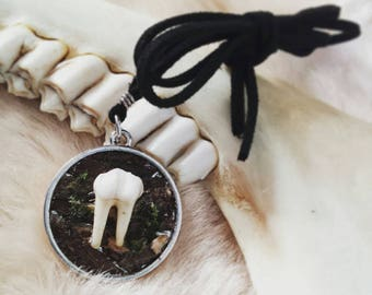 Woodland Bite - Ungulate Tooth & Bark Pendant