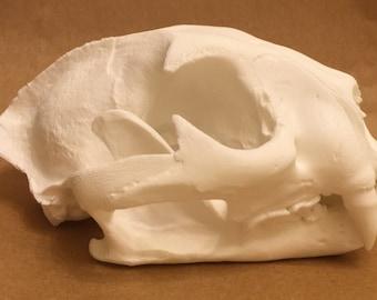 Cougar/ Mountain Lion replica skull