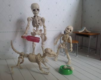 Mr Bones skeleton articulated