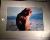 A Cosmopolitan Monkey - M...