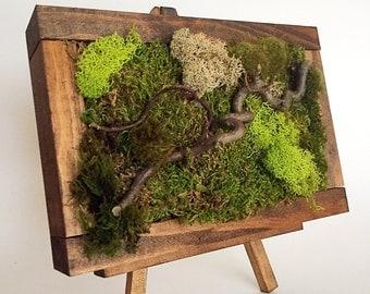 """10""""x7.5"""" Moss art wall/ Hanging garden/ Vertical garden/ Living wall/ Moss garden/Air Plant holder/natural branches/ Preserved living wall/"""