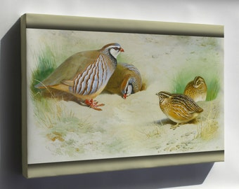 Canvas 24x36; French Partridge And Chicks By Archibald Thorburn 1915